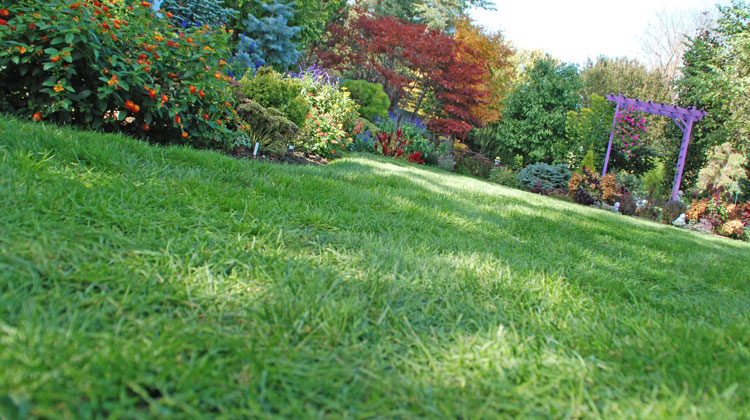 keep your lawn green